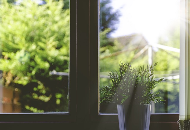 Plant on Windowsill