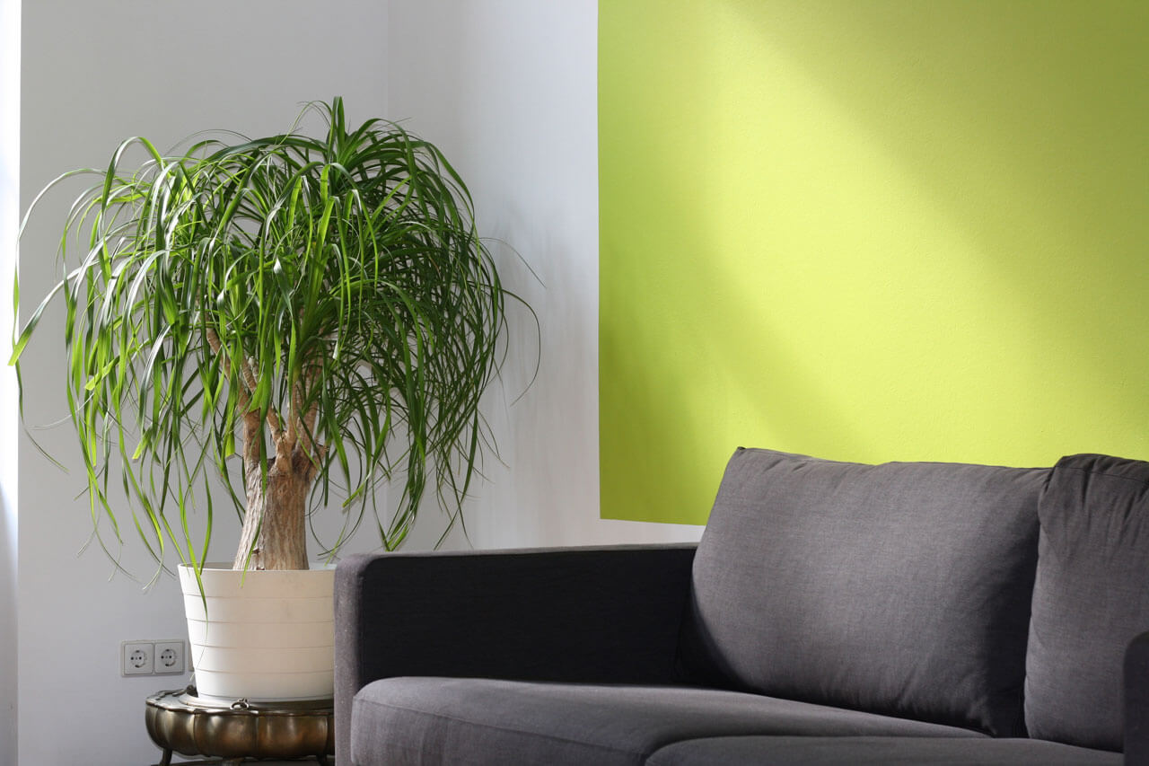 A sunlit room with a lively green wall and a plant, placed next to a charcoal grey couch.