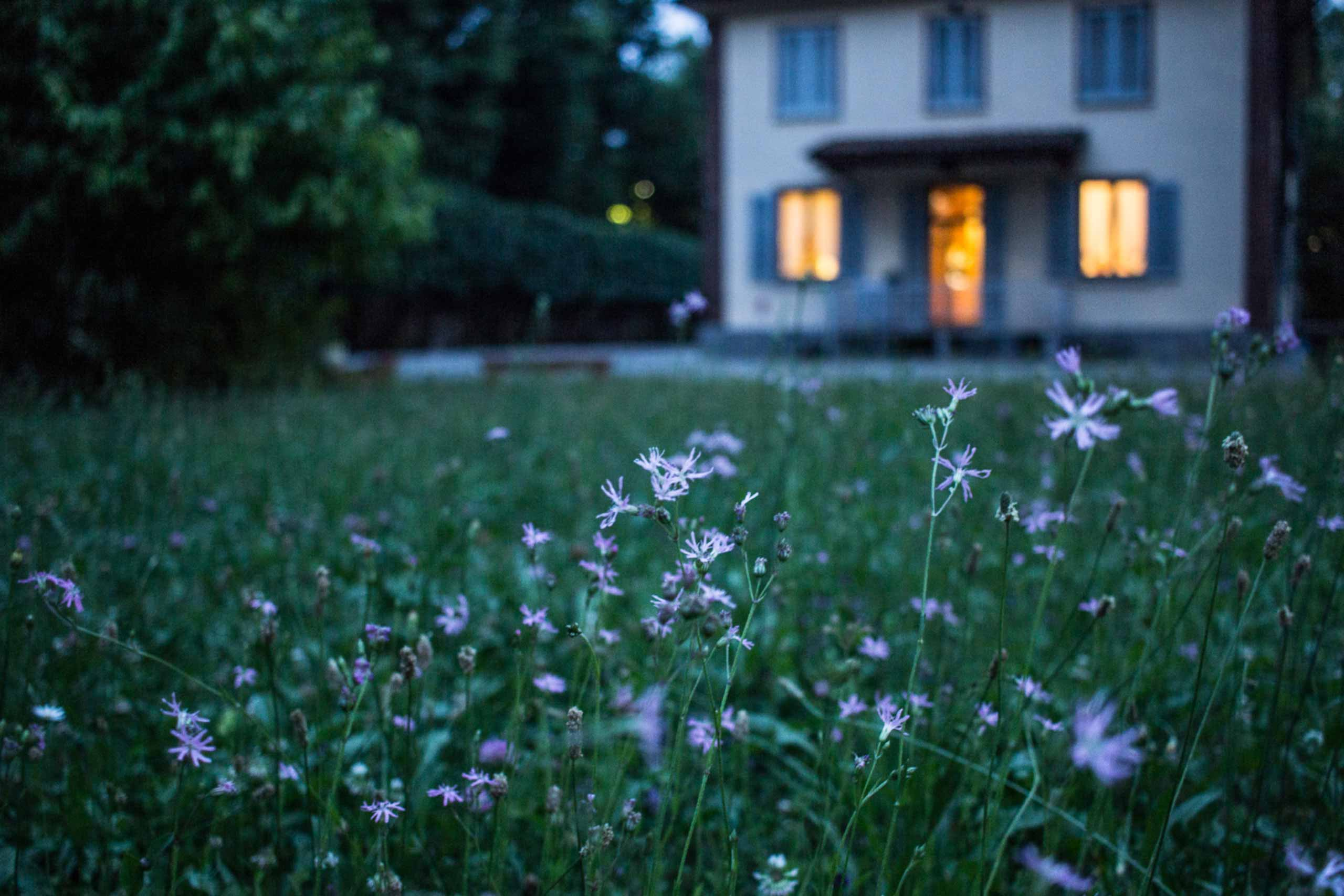 In the background and out of focus, a home with the lights on, with a foreground of grass and flowers, softly lit in the dusk light.