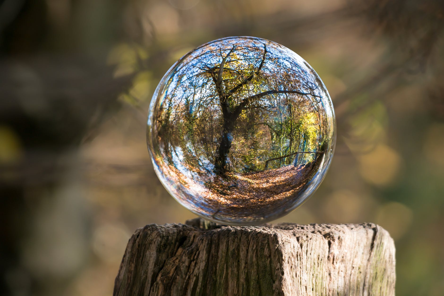 The reflection of a tree in a glass sphere